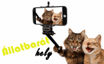 cats-5966028_1920 (3)